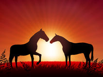 Horses on Sunset Background Royalty Free Stock Photo