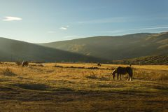 Horses at sunset royalty free stock images