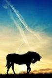 Horses at sunset Stock Image
