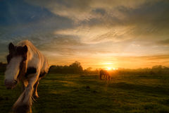 Horses On Sunset Landscape Royalty Free Stock Photo