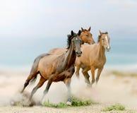 Horses in sunset Stock Photos