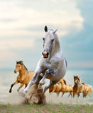 Horses in sunset Royalty Free Stock Image