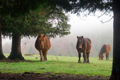Horses surrounding by trees Royalty Free Stock Image