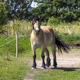 Horses in Suwalki Landscape Park, Poland. Royalty Free Stock Photo