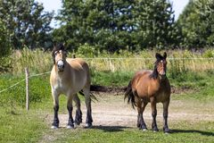 Horses in Suwalki Landscape Park, Poland. Stock Photo