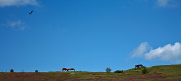 Horses in Sweden Royalty Free Stock Images