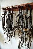 Horses tack in a row headgear halters bridles. On white wall royalty free stock images