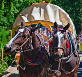 Horses at Tatra Mountains Stock Photos