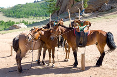 Horses at tethering post. Three brown horses tied at tethering post royalty free stock image