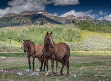 Horses in The Tetons Royalty Free Stock Photo