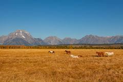 Horses and Tetons Royalty Free Stock Photography