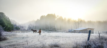 Horses in their corral on a frosty November morning. Royalty Free Stock Images