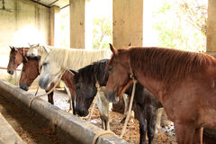 Horses in their stable Royalty Free Stock Images