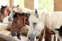 Horses in their stable Royalty Free Stock Photography
