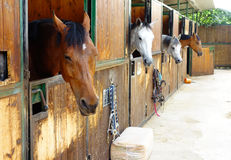 Horses in Their Stalls. In a riding stables Royalty Free Stock Photo