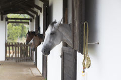 Horses in their stalls. Rustic horse in the stables Stock Photo
