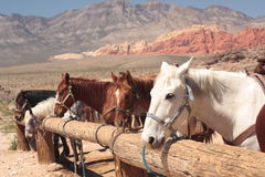 Free Horses Tied Up Royalty Free Stock Image - 9067506