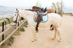 Horses tied on wooden rail in trail horse mountain Royalty Free Stock Photo
