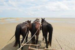 Horses with tilt car at the coast Stock Photos