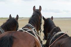 Horses with tilt car at the coast Royalty Free Stock Photos