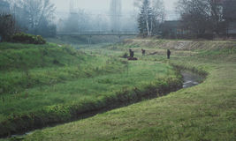 Horses by the town river. On a misty autumn day Royalty Free Stock Photography