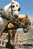 Horses at the town square in Antwerp Royalty Free Stock Images