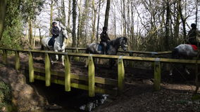 Horses on a trail ride stock footage