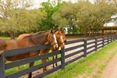 Horses at a training farm in ocala Stock Photo