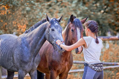 Horses training Stock Image