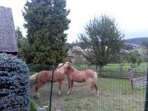 Horses. Tree, grass, garden, farm Stock Photography