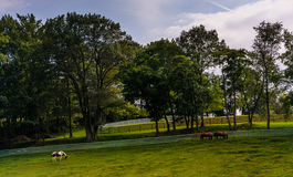 Horses and trees on a farm in rural York County, Pennsylvania. Stock Photo