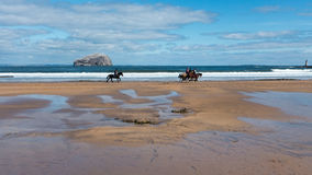 Horses Trotting on Beach with Bass Rock in the Background. A group of horses trotting along a sandy beach with the Bass Rock in the background Stock Image