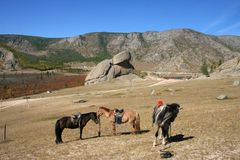 Horses at Turtle Rock. Horses in front of Turtle rock in the nature resort area of Tirilj in Mongolia royalty free stock image