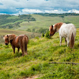 Horses in Tuscany Stock Images