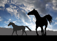 Horses. Two horses in the sunset Stock Image