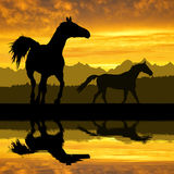 Horses. Two Horses in the sunset Royalty Free Stock Photo