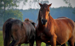 Horses. Two horses in their natural environment Stock Images