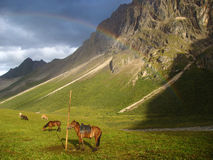 Horses under the rainbow Stock Photo