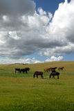 Horses Under Spring Sky Stock Photography