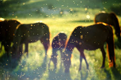 Horses under the sun Royalty Free Stock Image