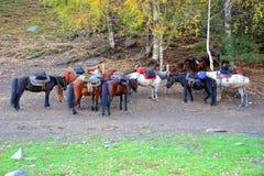 Horses under the tree. Many horses in sunshine,near trees Stock Images