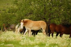 Horses under a tree. A picture of some horses standing in the trees after a rain in Arizona Royalty Free Stock Image