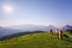 Horses in Urkiola mountains Royalty Free Stock Images