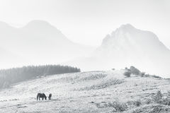 Horses in Urkiola mountains on hazy day Royalty Free Stock Photo