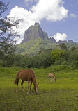 Horses in the valley Stock Photography