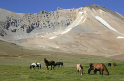 Horses in the valley Stock Images
