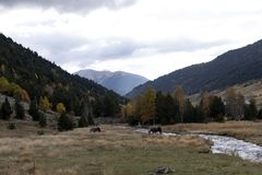 Horses in the valley of Vall d `incles in the fall, Andorra stock images