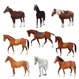 Horses in various poses stock illustration