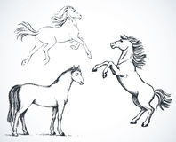 Horses. Vector drawing Royalty Free Stock Image