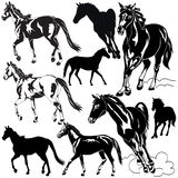 Horses Royalty Free Stock Image